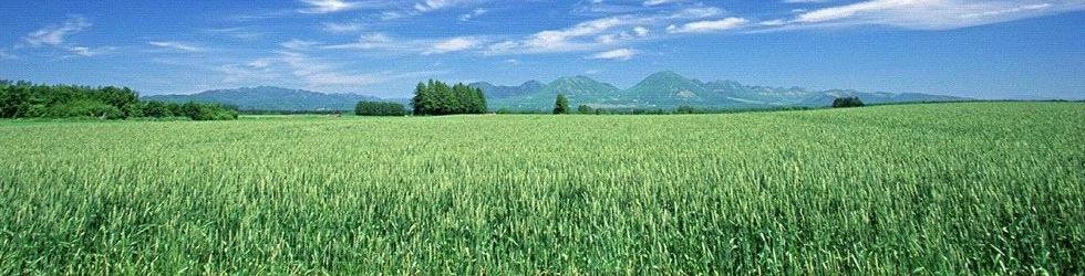 Landscape - Green Corn Field